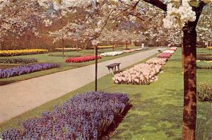 Netherlands Lisse, Keukenhof Botanical Garden, purple, Flowers, Fleurs