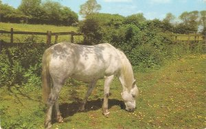 Horse grqazing Nice vintage Salmon postcard