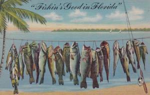 Florida Fishin's Good In Florida 1946 Curteich