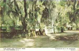 Live Oaks and Spanish Moss at Walterboro, South Carolina Postcard