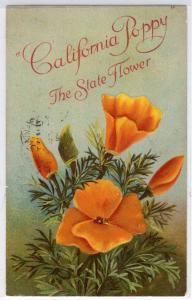 CA Poppy - State Flower