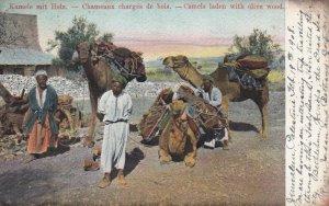 CAMEL ; Kamele mit Holz , Jerusalem , Palestine , 1908