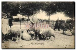 Old Postcard Folklore Normandy on the fairgrounds Sheep