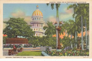 P1932 vintage postcard havana fraternity tree, capitol cuba unused