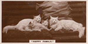 White Cat Happy Family German Old Real Photo Cats Cigarette Card