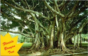 Postcard Florida Banyan Tree Banner Card Miami Big Tree Chrome Unposted 1536