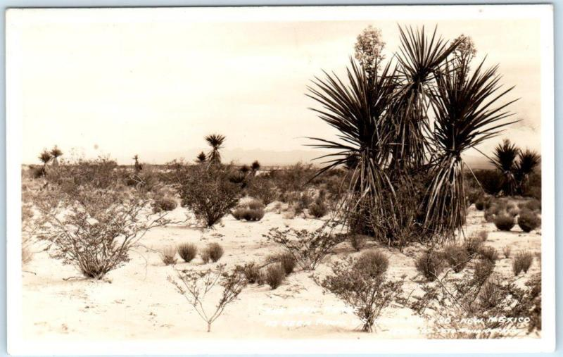 RPPC  NEW MEXICO, NM   The Open Range  Highway 80  Frasher c1930s-40s Postcard