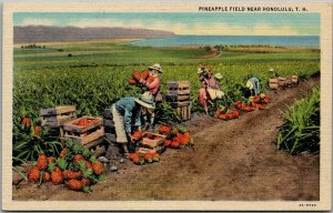 1940s Hawaii Postcard PINEAPPLE FIELD NEAR HONOLULU Curteich Linen 4A-H795