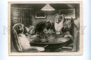 143428 GREAT DANE COLLIE St.Bernard CASINO playing Cards PHOTO