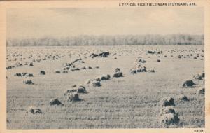 STUTTGART, Arkansas, PU-1944; A Typical Rice Field