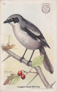 Useful Bird - Loggerhead Shrike - Arm & Hammer Trade Card