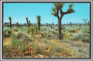 United States - Springtime On The High Desert - [MX-278]