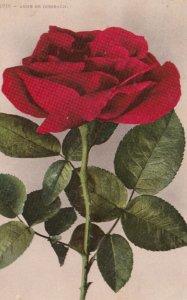 anne De Diesbach Rose Flower , 00-10s