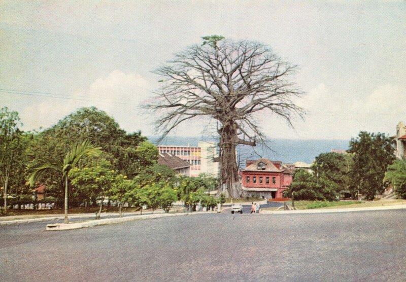 Vintage Postcard, The Cotton Tree Independence Avenue, Freetown Sierra Leone 84W