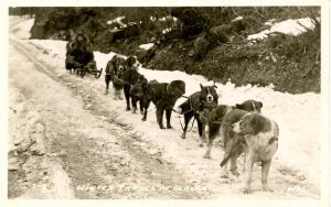 AK - Sled Dog Team.   *RPPC