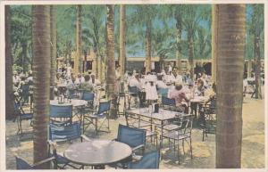 Florida Largo Indian Rocks Fruit Company Palm Garden Dining Room