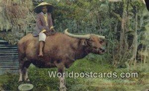 Carabao, Beast of Burben Manila Philippines 1918