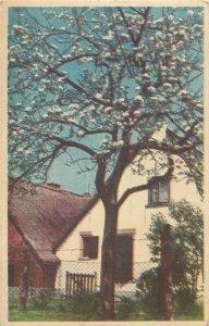 Postcard house & blossom tree Netherlands