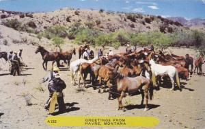 Cowboys Herding in Pack of Horses, Greetings from Havre, Montana 1952