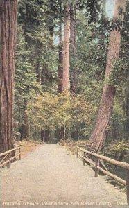 California Pescadero Sam Mateo County Butano Grove Trees