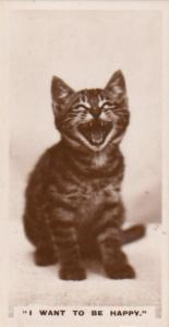 Giant Cheshire Happy Cat Smile German Real Photo Cats Cigarette Card