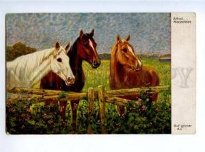 156606 HORSES Field by Alfred WECZERZICK Vintage Color PÑ