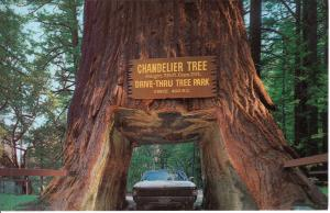 US    PC1272  CHANDELIER DRIVE-THRU TREE