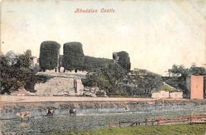Rhuddlan Castle, Schloss Chateau, cattle