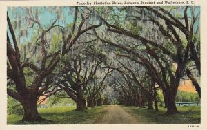 South Carolina Beaufort Tomotley Plantation Drive Between Beaufort And Walter...
