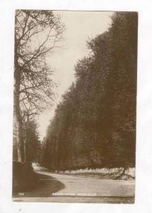 RP  Beech Hedge, Meikleour, Scotland, 00-10s