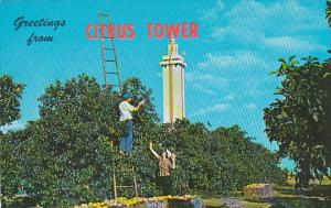 Greetings From Citrus Tower Clermont Florida Tennessee