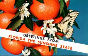 Florida Greetings From The Sunshine State 1969