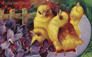 EASTER, 1900-10s; Greetings, Four chicks in purple egg shell, Violets, Gold D...