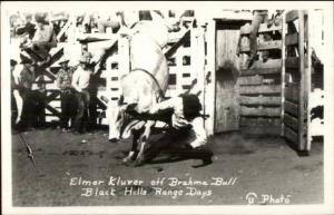 Black Hills SD Rodeo Cowboys Elmer Kluver Brahma Bull Real Photo Postcard