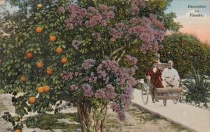 Beautiful Flowers December In Florida 1909