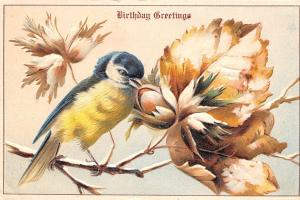 Blue Bird With Yellow Breast Pecks Open Acorn~Leaves~Emboss~Germany 1910~ASB