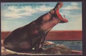 Hippopotamus,San Antonio Zoo,San Antonio,TX Postcard