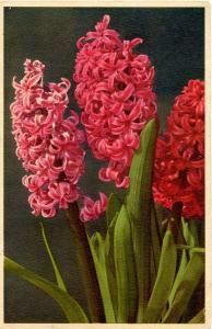 Flowers -     Hyacinth                          (Thor & Gyger #1133)