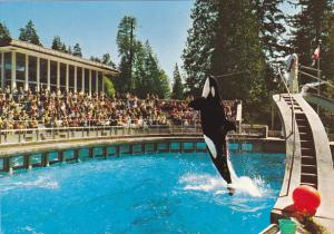 Skana The Killer Whale Vancouver Aquarium British Columbia Canada