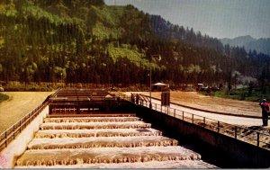 Oregon Bonneville Dam Bradford Island Fish Ladder