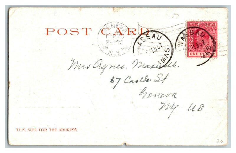 1907 The Colonial Nassau Bahama Islands Vintage Standard View Postcard