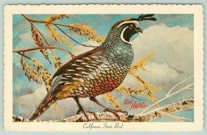 California State Bird~Valley Quail in Tree~Clouds~1967 Ken Haag~Artist Postcard