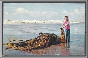Ocean Beach Piles of Kelp