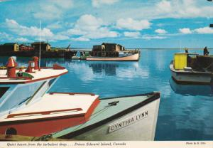 Harbour, Lobster Boats and the Dragger Fleet, PRINCE EDWARD ISLAND, Canada, 5...
