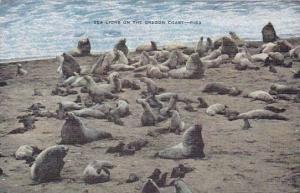 Sea Lions On The Oregon Coast