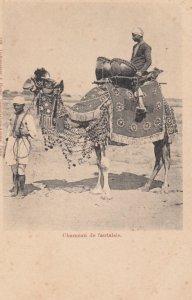 CAMEL ; Chameau de fantaisie , EGYPT , 00-10s