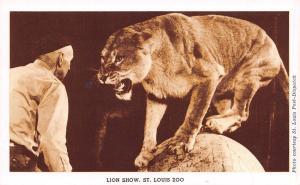 St Louis Missouri~Lion Show~1910 Postcard