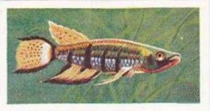 Mitchum Foods Vintage Trade Card Aquarium Fish 1957 2nd Series No 31 Flat-Hea...