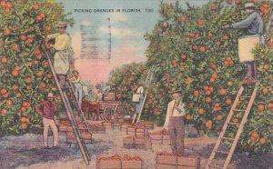 Florida Saint Petersburg Picking Oranges In Florida 1947