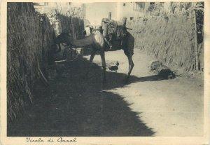 Post card Eritrea Assab alley street view camel